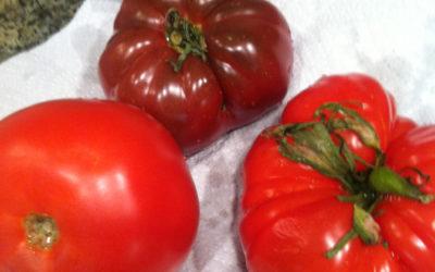 Got Tomatoes